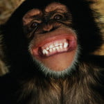 Chimp Kicks 90 Yard Punts